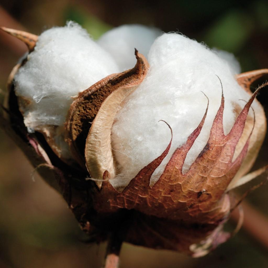 buendnis-fuer-nachhaltige-textilien