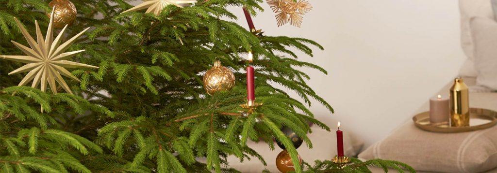 Nachhaltiger Weihnachtsbaum für die Feiertage