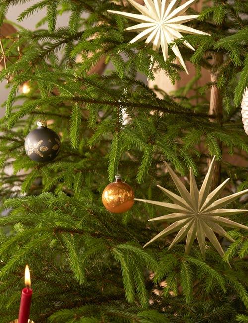 Weihnachtsbaum Herkunft.Ratgeber Für Einen Nachhaltigen Weihnachtsbaum Hessnatur Magazin