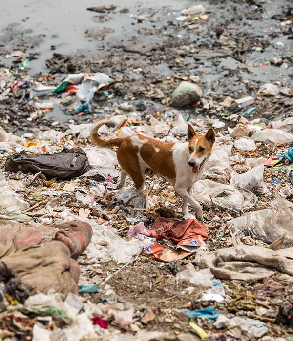 Bangladecsh Dhaka Müll Stadt