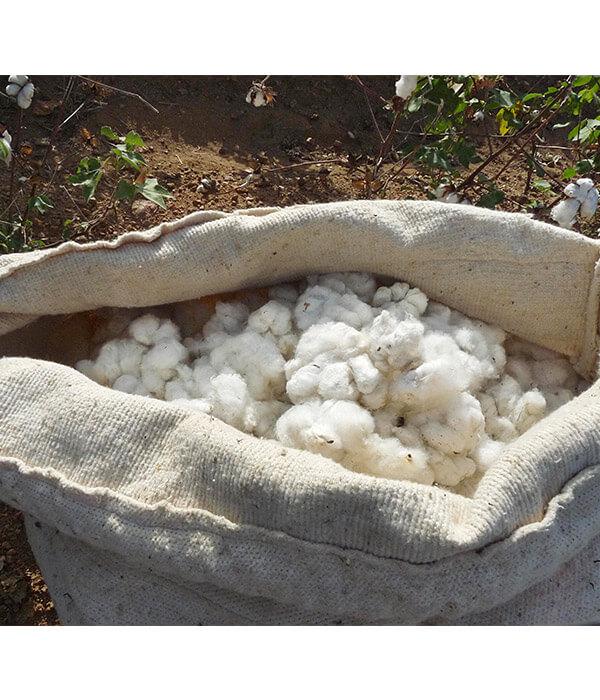 Bio-Baumwolle hessnatur