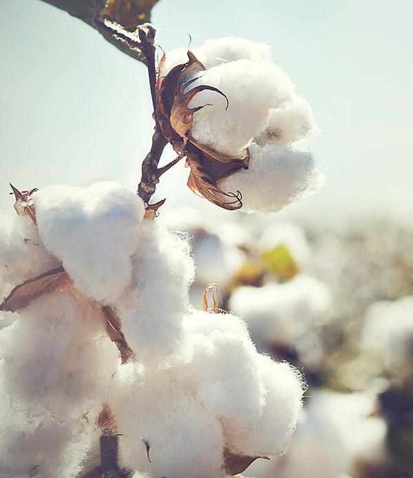 Bio-Baumwolle von hessnatur